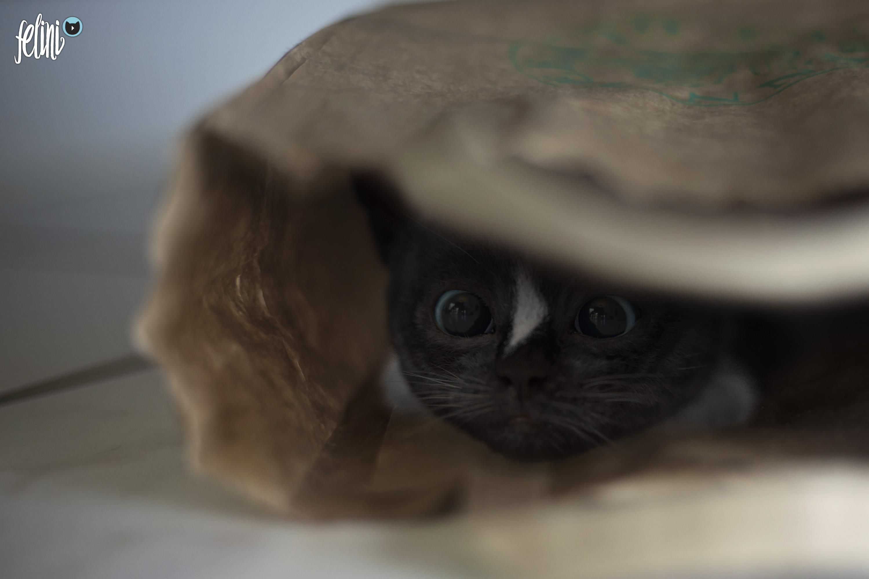 Felini hiding in paper bag