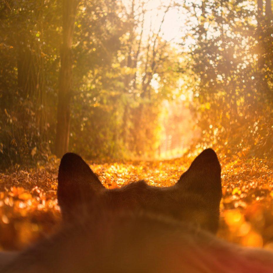 Felini - chasing autumn leaves