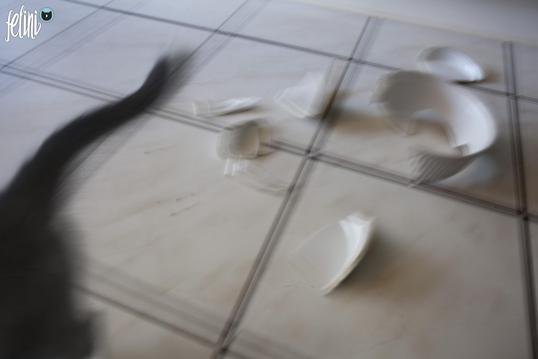 Felini broke a dish, cat running away