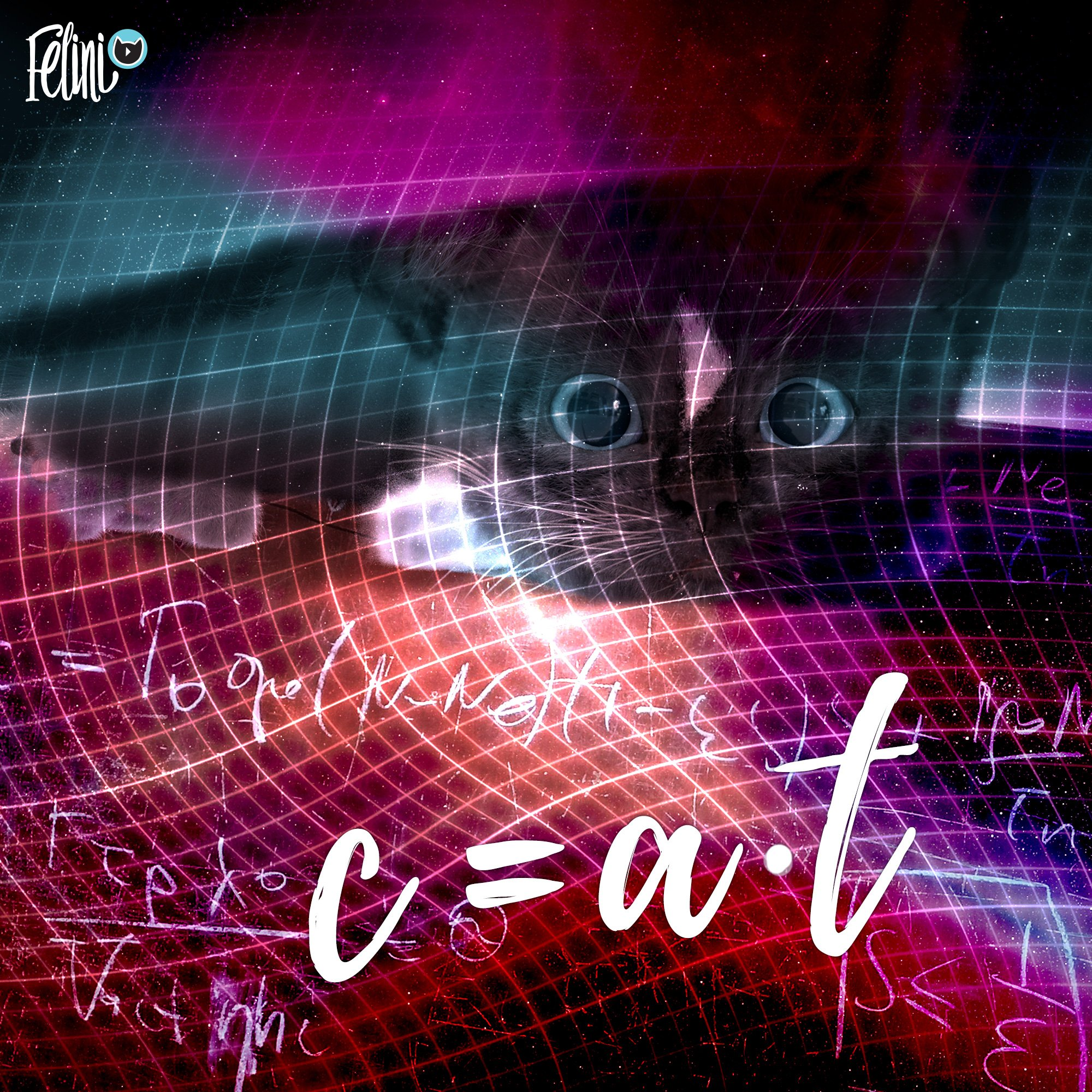 Felini introduces the cat formula