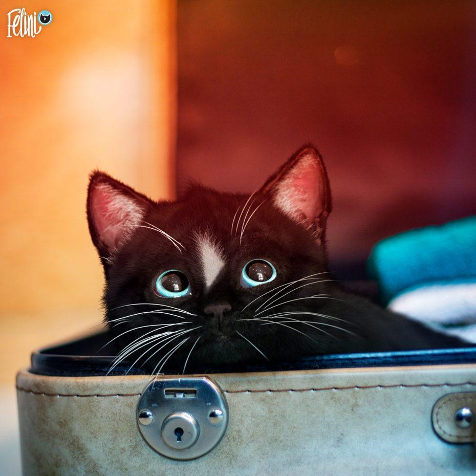 Felini - can I come along