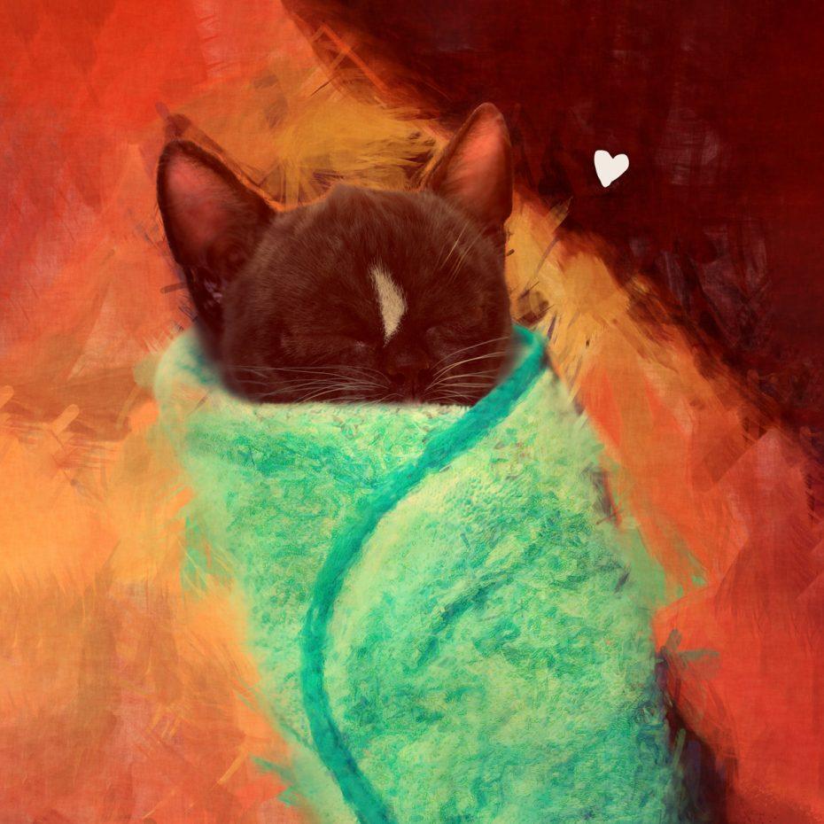 Felini is a purrito - shop those beautiful desings