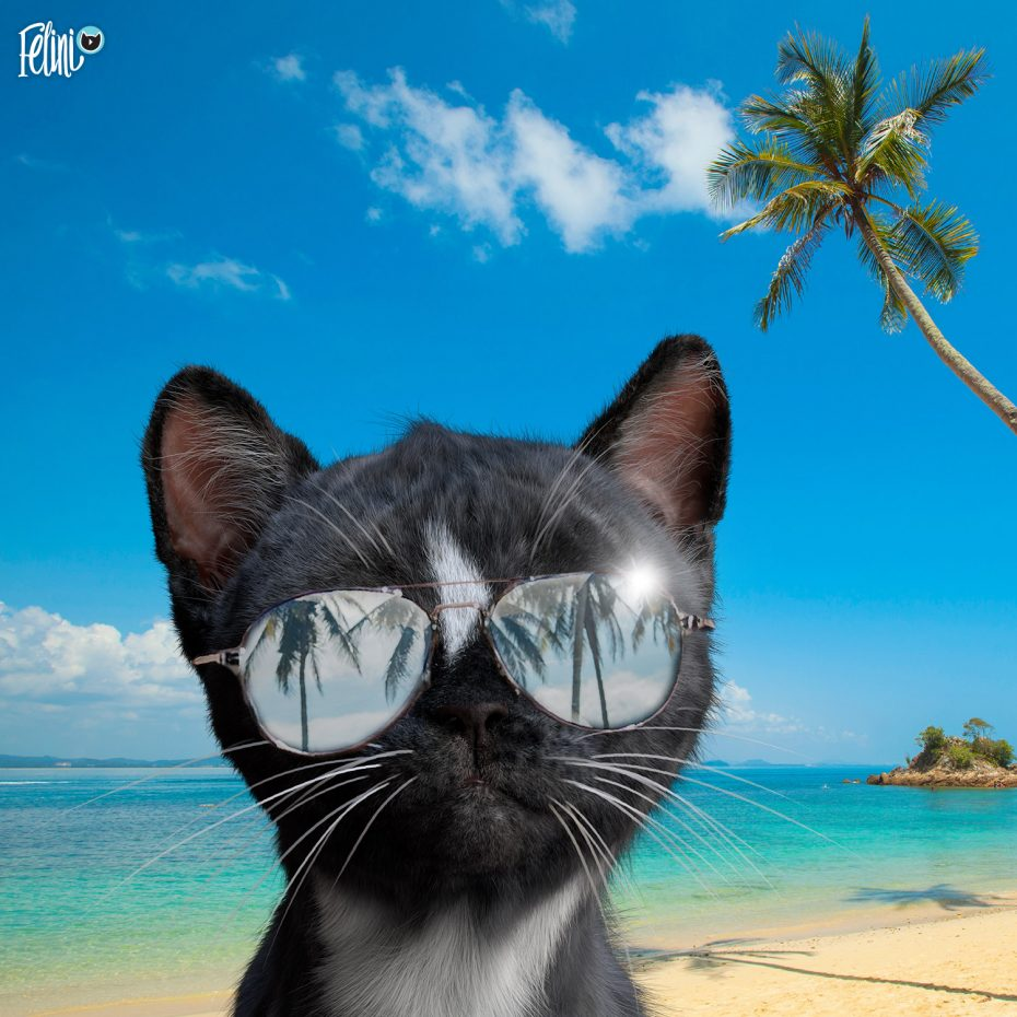 Felini the Cat wearing Sunglasses on the beach