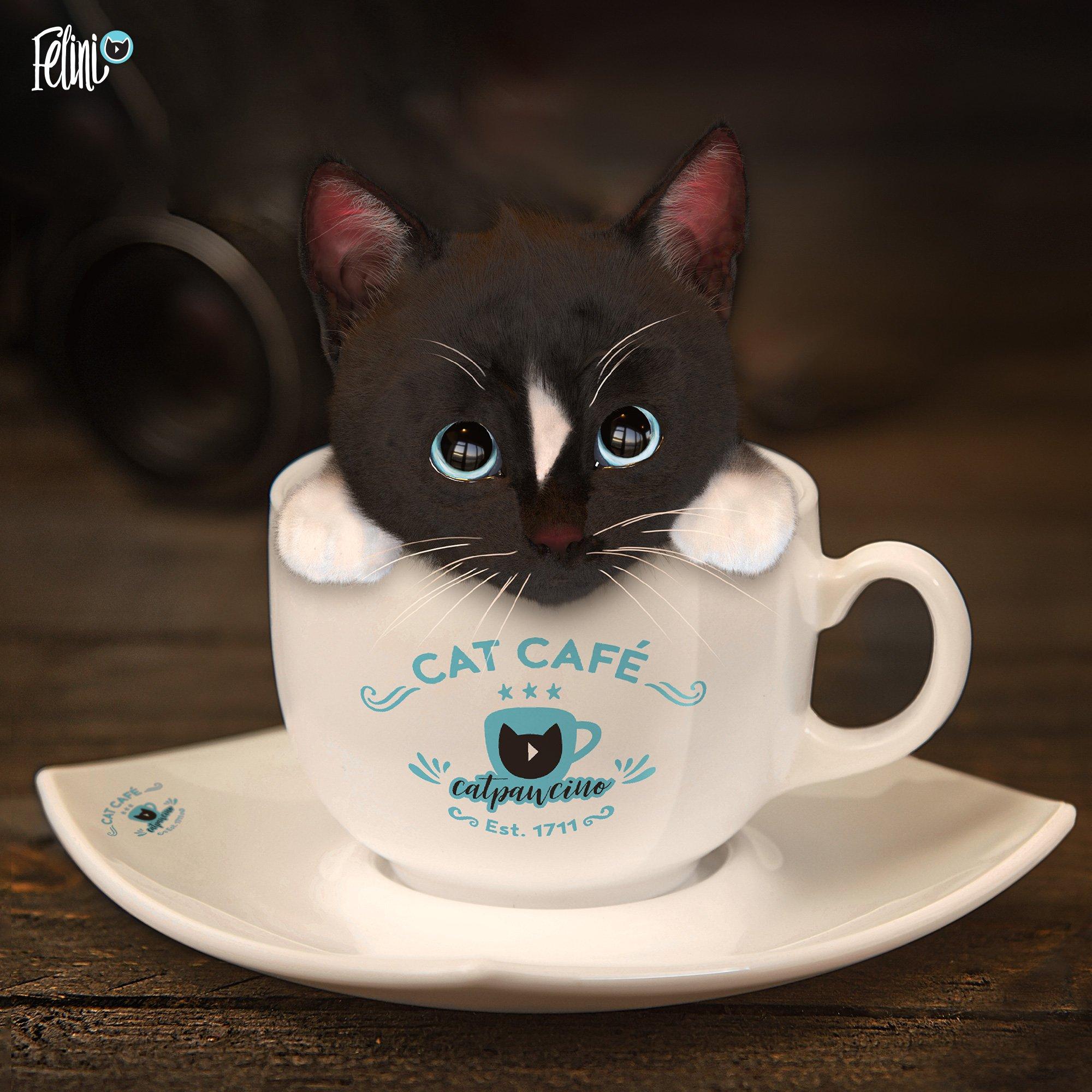 cup cat catpawcino