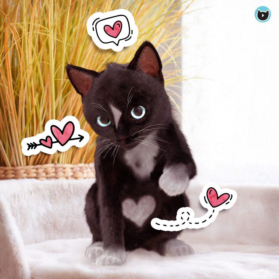 Valentines Cat Felini