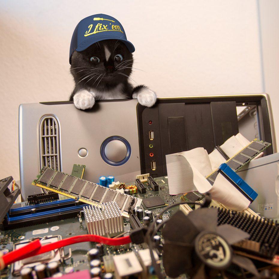 Repair Kitty Felini