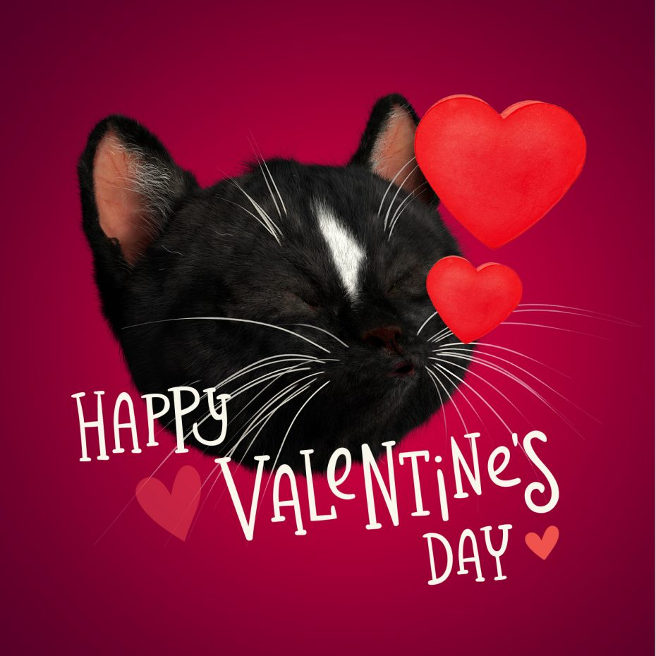Cute Black Cat Felini kissing pose with hearts coming out his mouth, letters saying Happy Valentine's Day