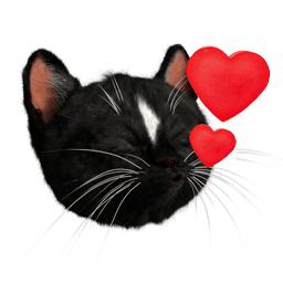 Felini Cat Head Kissing With 2 Hearts