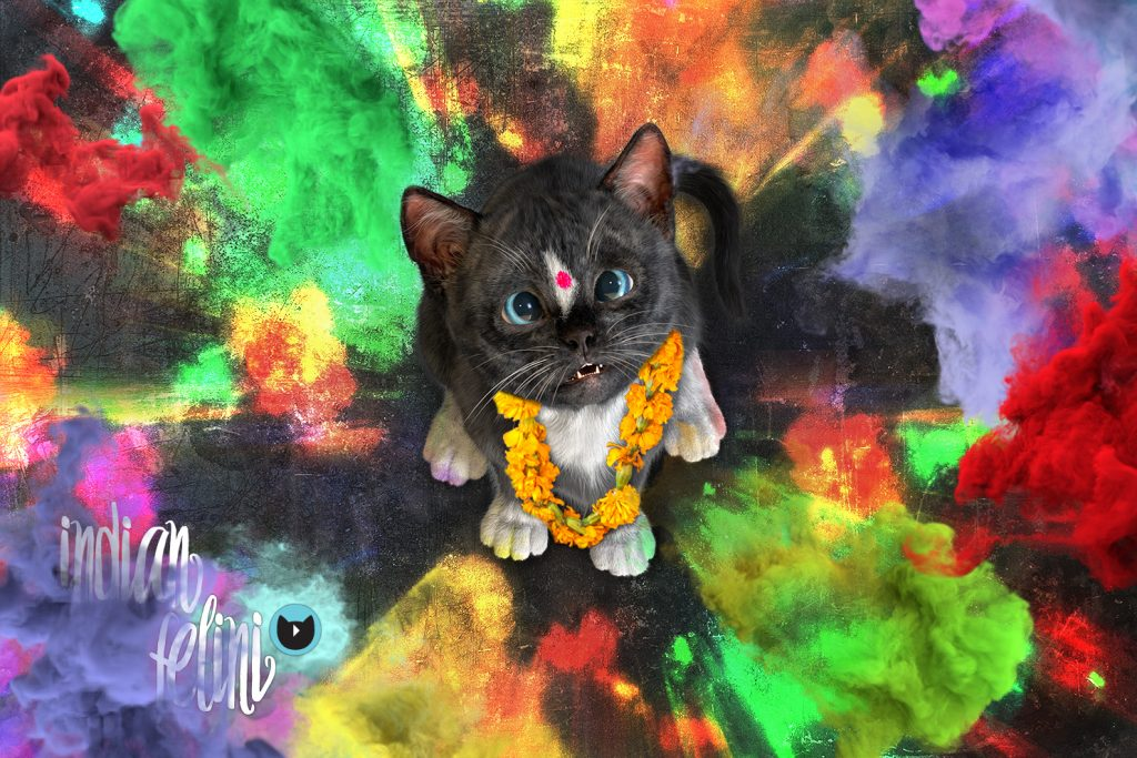 Felini With Indian Decoration Sitting Among Color Dust From The Holi Festival