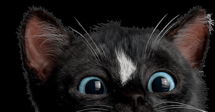 Felini the Kitty Cat peeking over headline