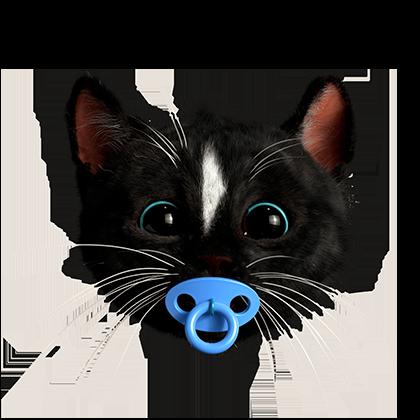 Cute Felini the Cat as baby kitten with pacifier