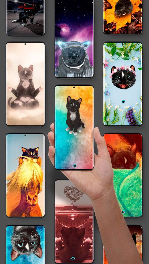 Multiple Modern Phones With Felini the Cat Wallpaper Screens