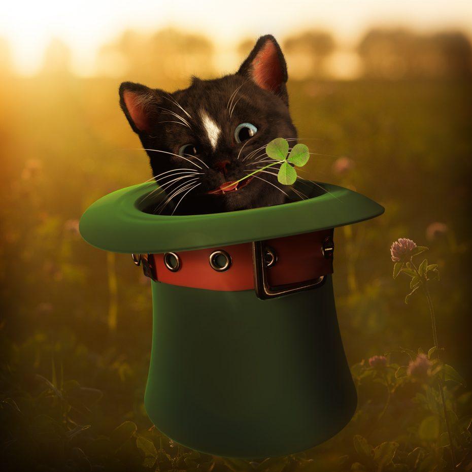 Felini the Irish Kitty Cat in a green Hat with shamrock