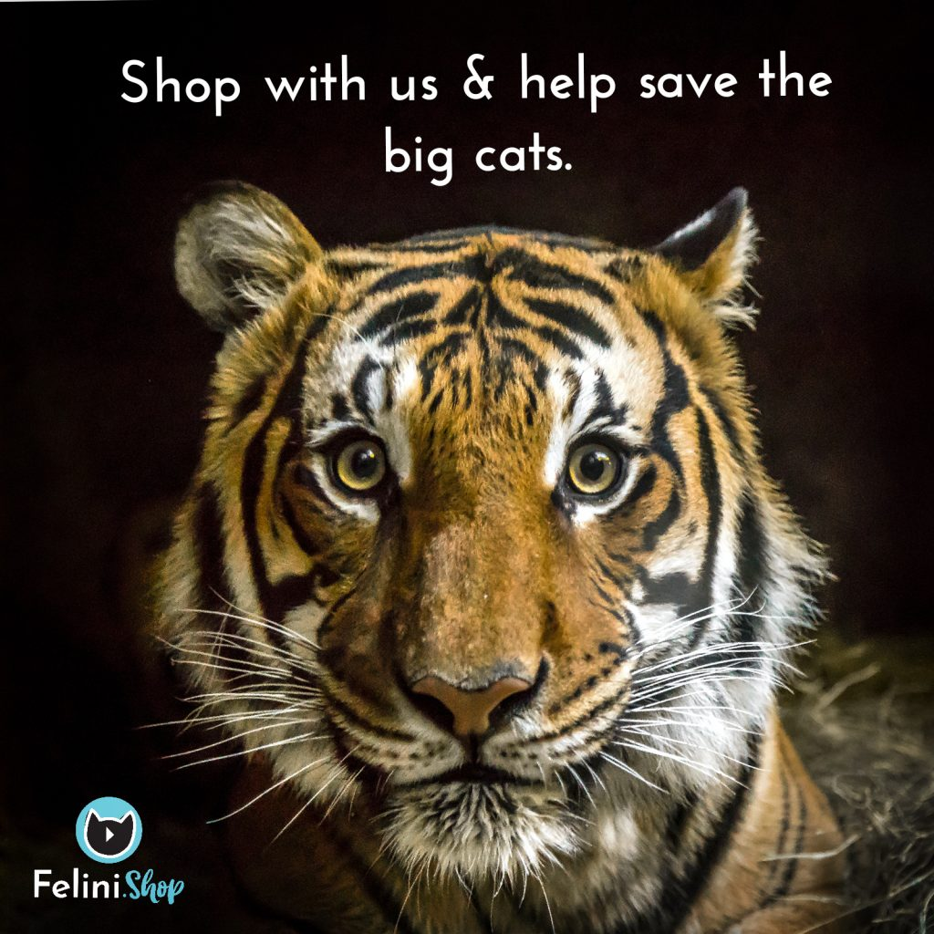 Cute Tiger Head with Felini Shop logo, shop with us & help save the big cats