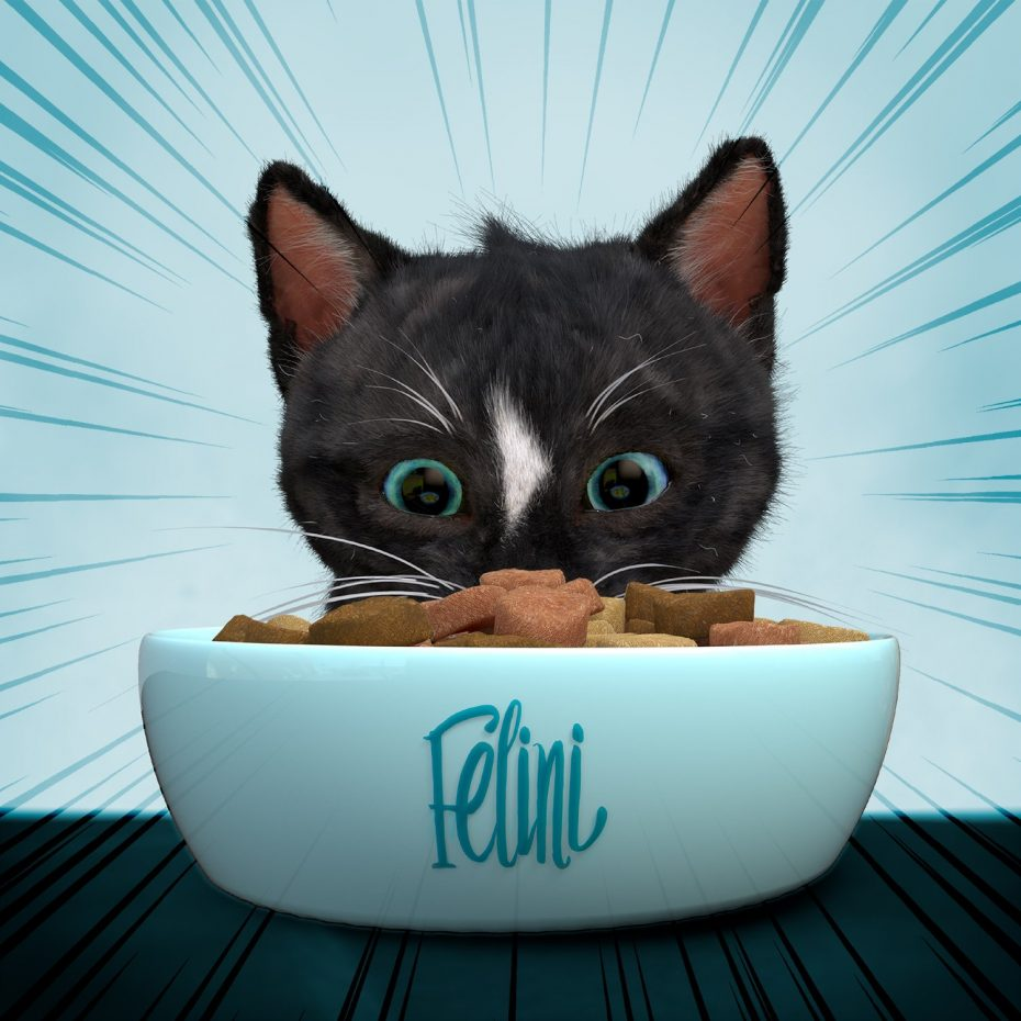 Felini the Kitty cat staring at his bowl of cat food